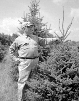Black and White image of man holding a live Christmas tree outdoors
